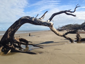 Driftwood Beach on Jekyll Island, our favorite destination in the Golden Isles